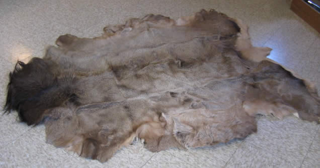 Hair On Elk Hide For Sale 44